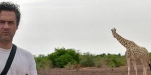 jirafas en Kouré